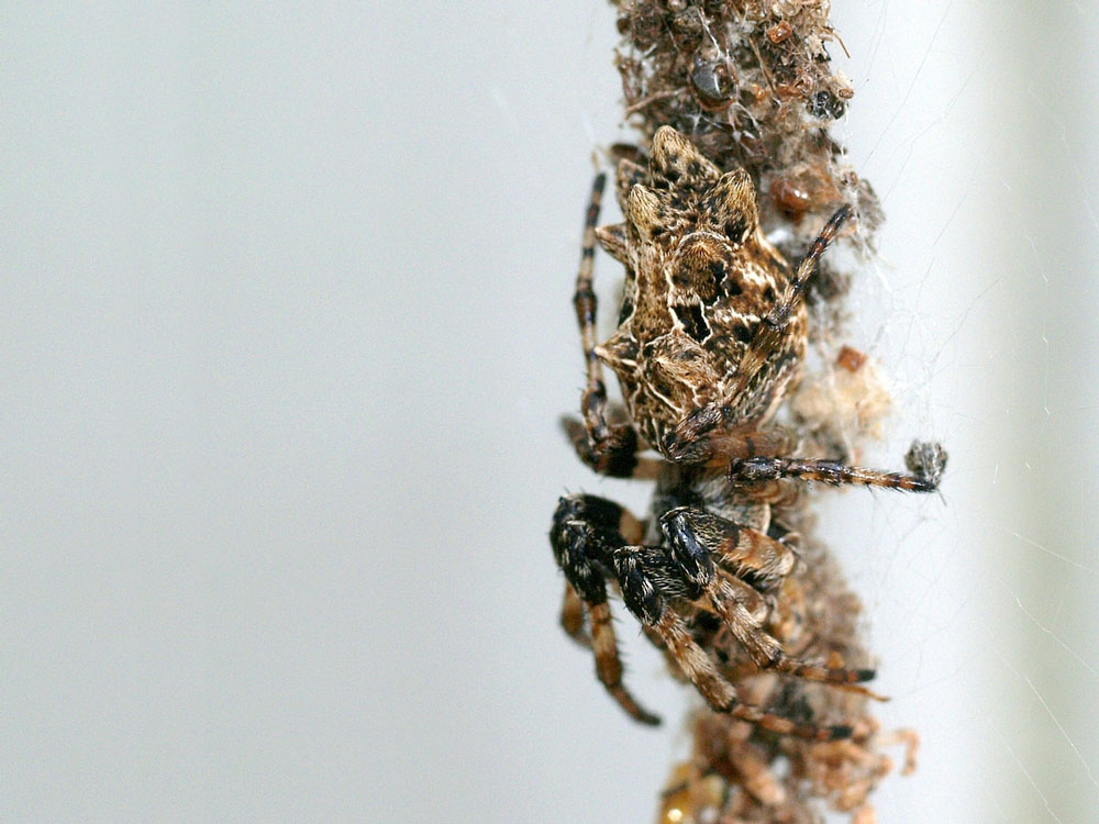 An orb spider waits on a column made of the gutted corpses of long-ago prey.